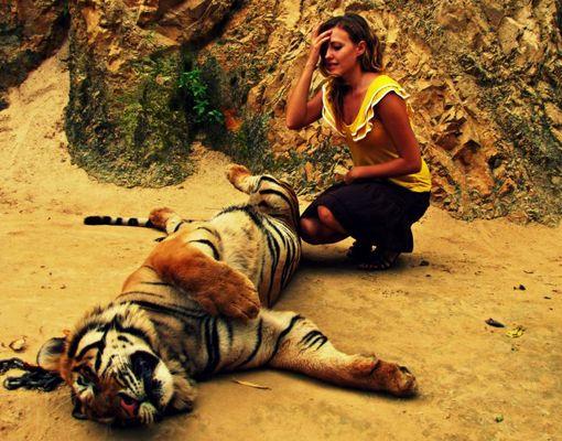meeting a tiger
