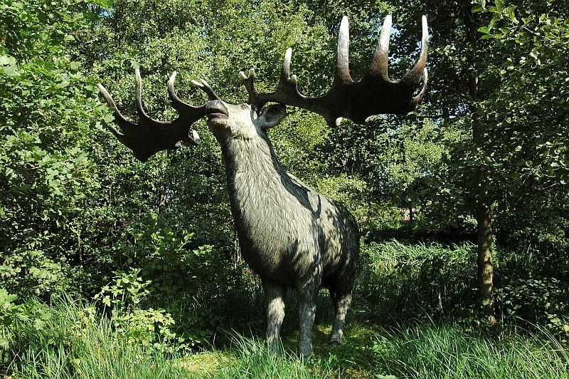 Größter Hirsch Der Welt