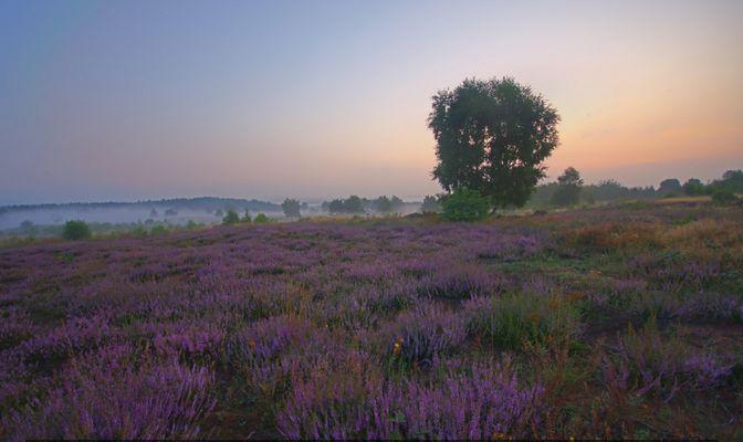 Mehlinger Heide 2009