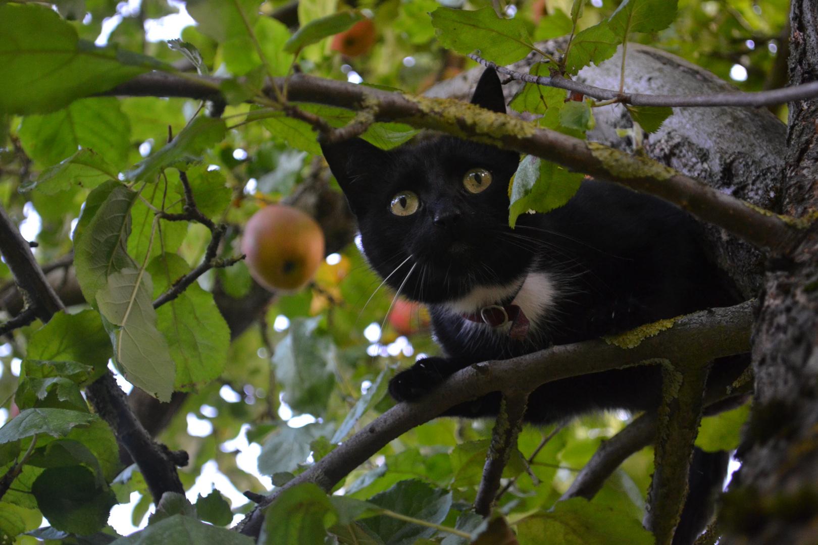 mehr ein Eichhörnchen statt einer Katze ;)