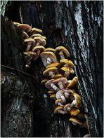 Mehr Pilze
