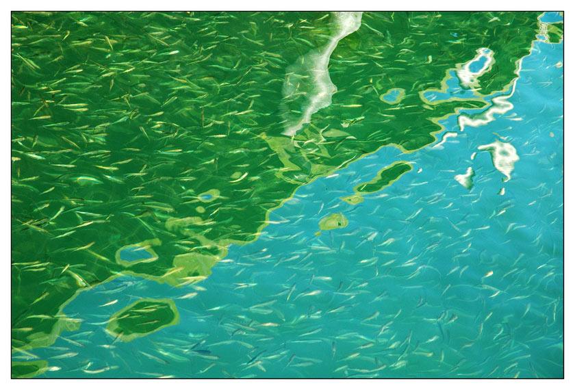 mehr Wasser als Fisch