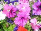 Mehrere Blüten