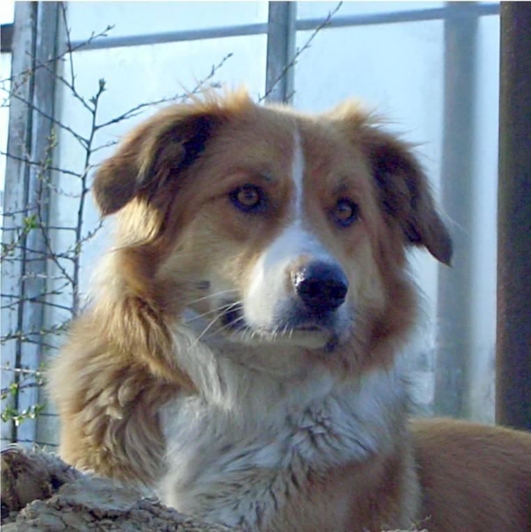 Meika als erwachsene Hundedame