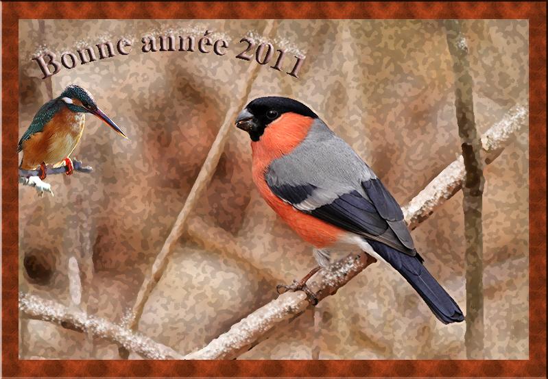Meilleurs voeux 2011