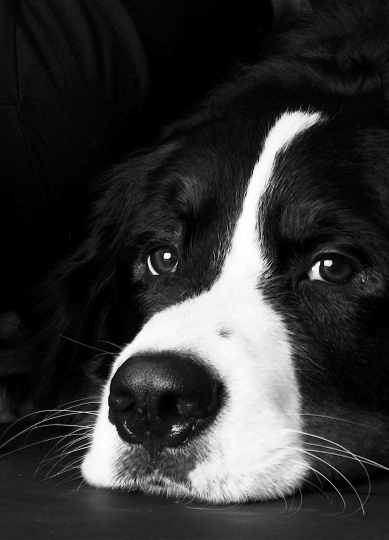 Mein 1. Hundeporträt