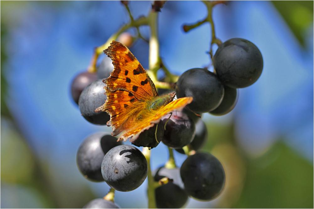Mein 3. Schmetterling