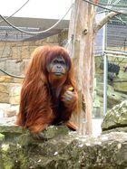 Mein Affe