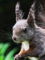 Mein allererstes Eichhörnchen!