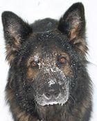 mein alter hund