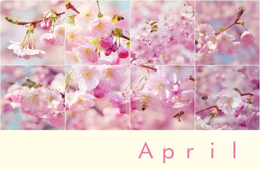 Mein April ist pink