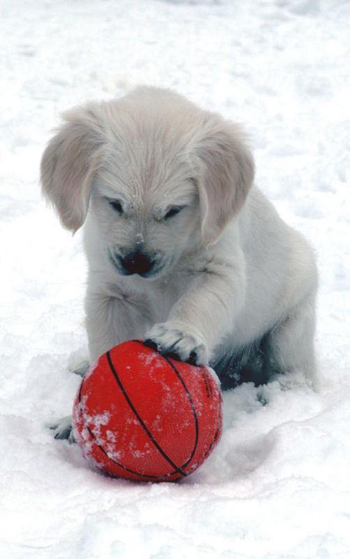 Mein Ball....!