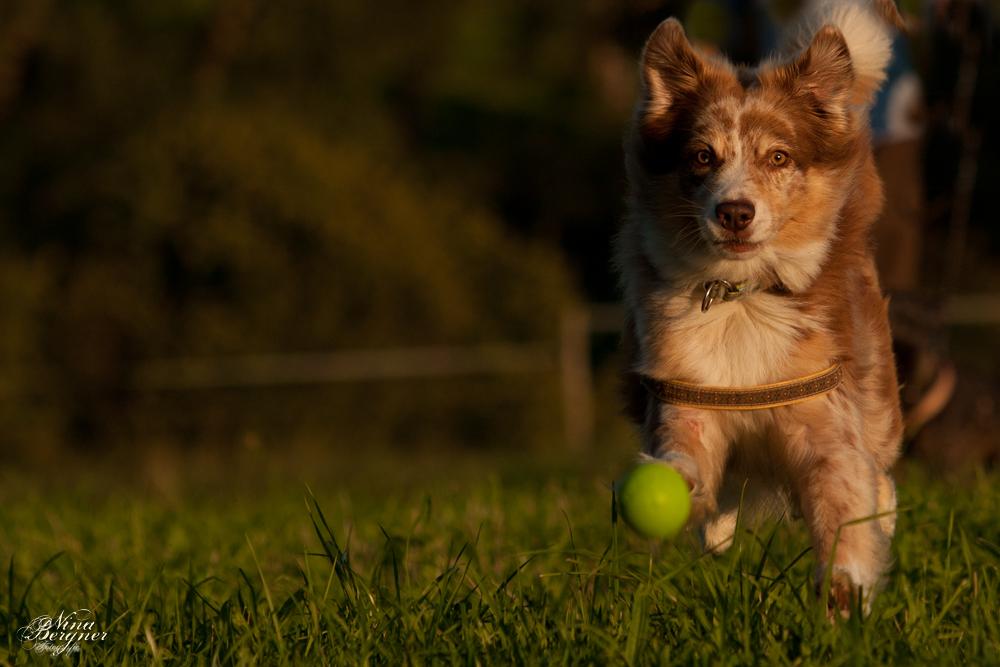 Mein Ball.... gleich hab ich dich :)