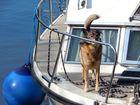 Mein Ball, mein Boot!