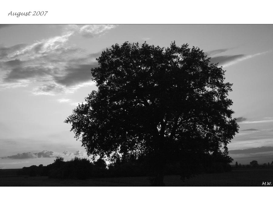 """"""" Mein Baum """" (2)"""