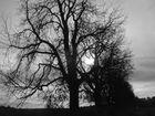 (m)ein Baum