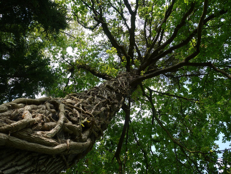 Mein Baum des Lebens