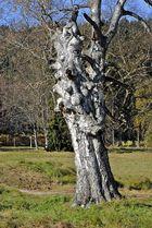 mein Baum - ein Kunstwerk