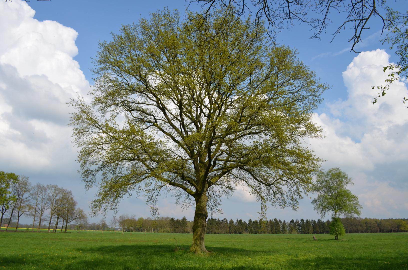 Mein Baum im April