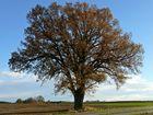 """""""Mein Baum"""" im Herbst II"""