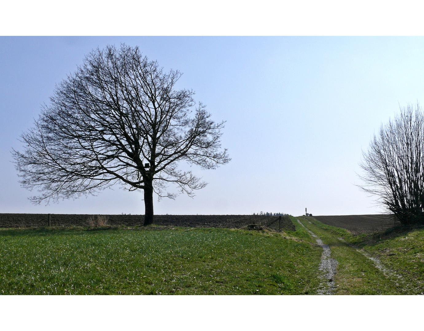 """""""Mein"""" Baum im März"""