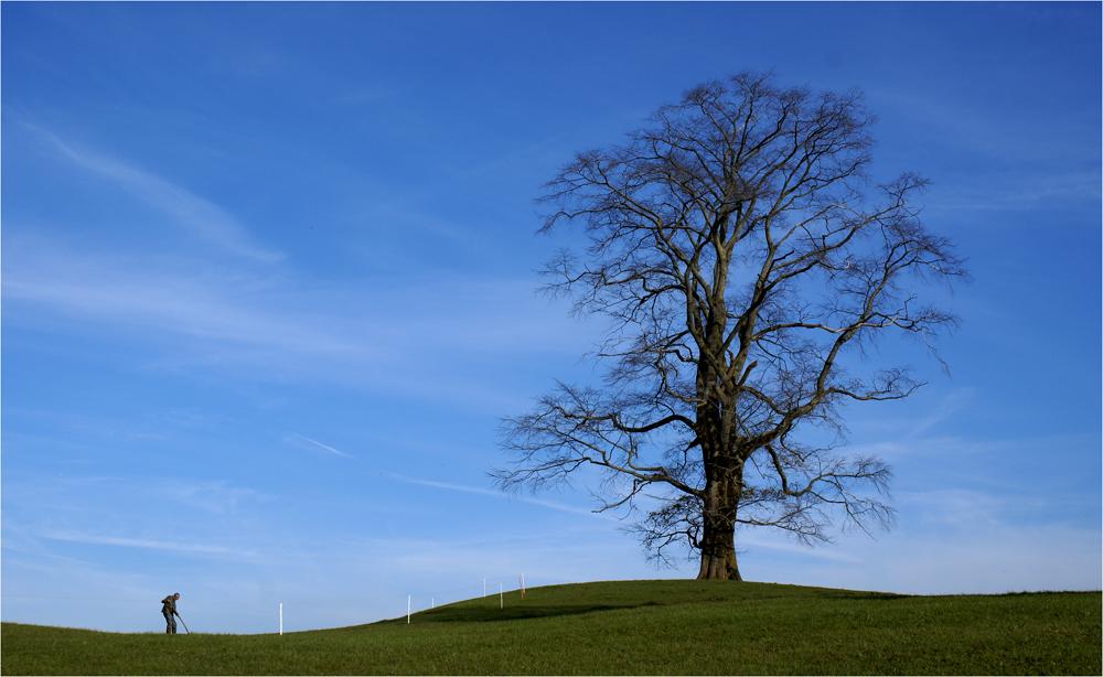 Mein Baum im Spätherbst