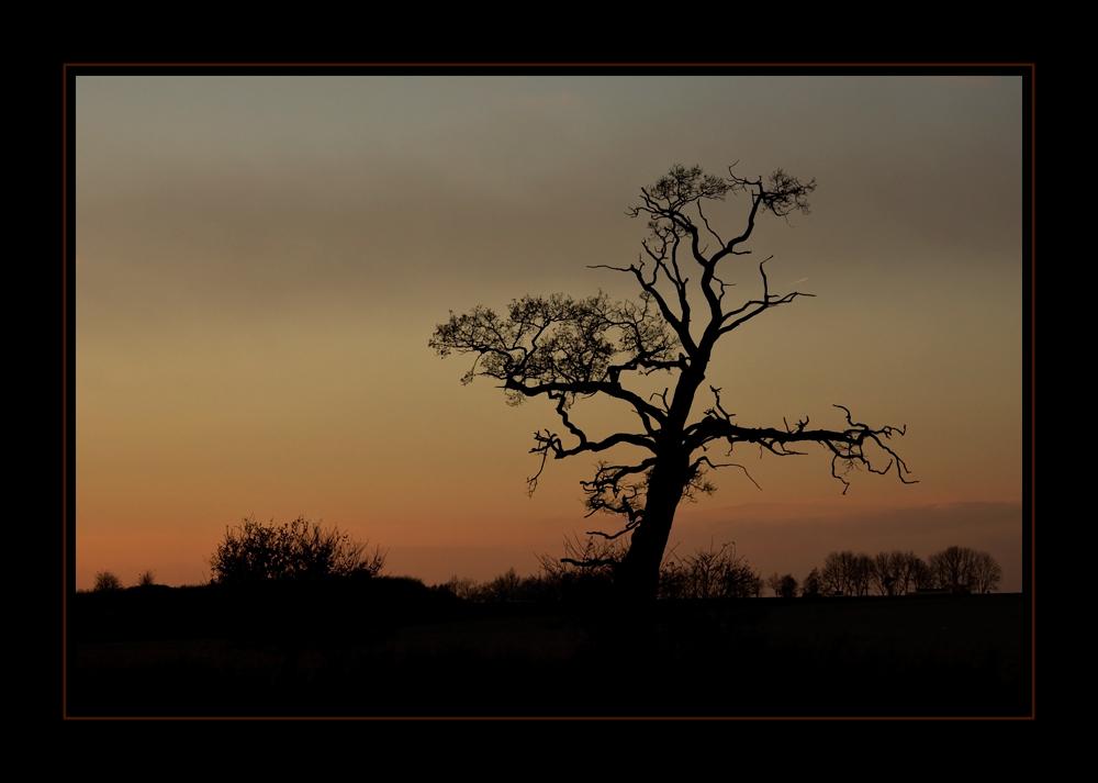 Mein Baum... im Winter