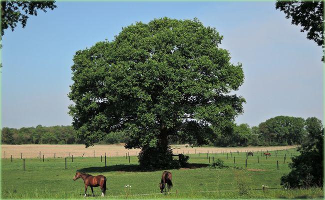 """""""Mein Baum"""" und die Hottemaxe...."""