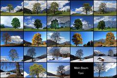 Mein Baum zu allen Jahreszeiten-DIASHOW