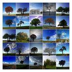 * Mein Baumjahr 2009 *