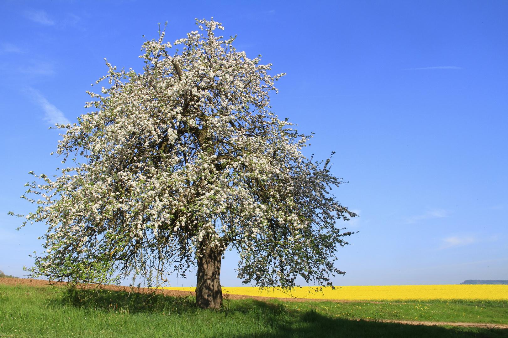 Mein Beitrag zum Tag des Baumes