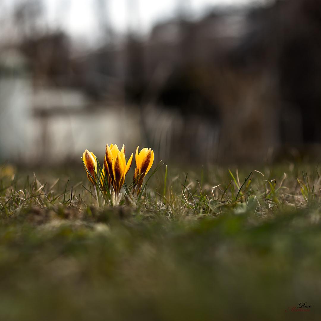 Mein Beitrag zum Thema Frühling