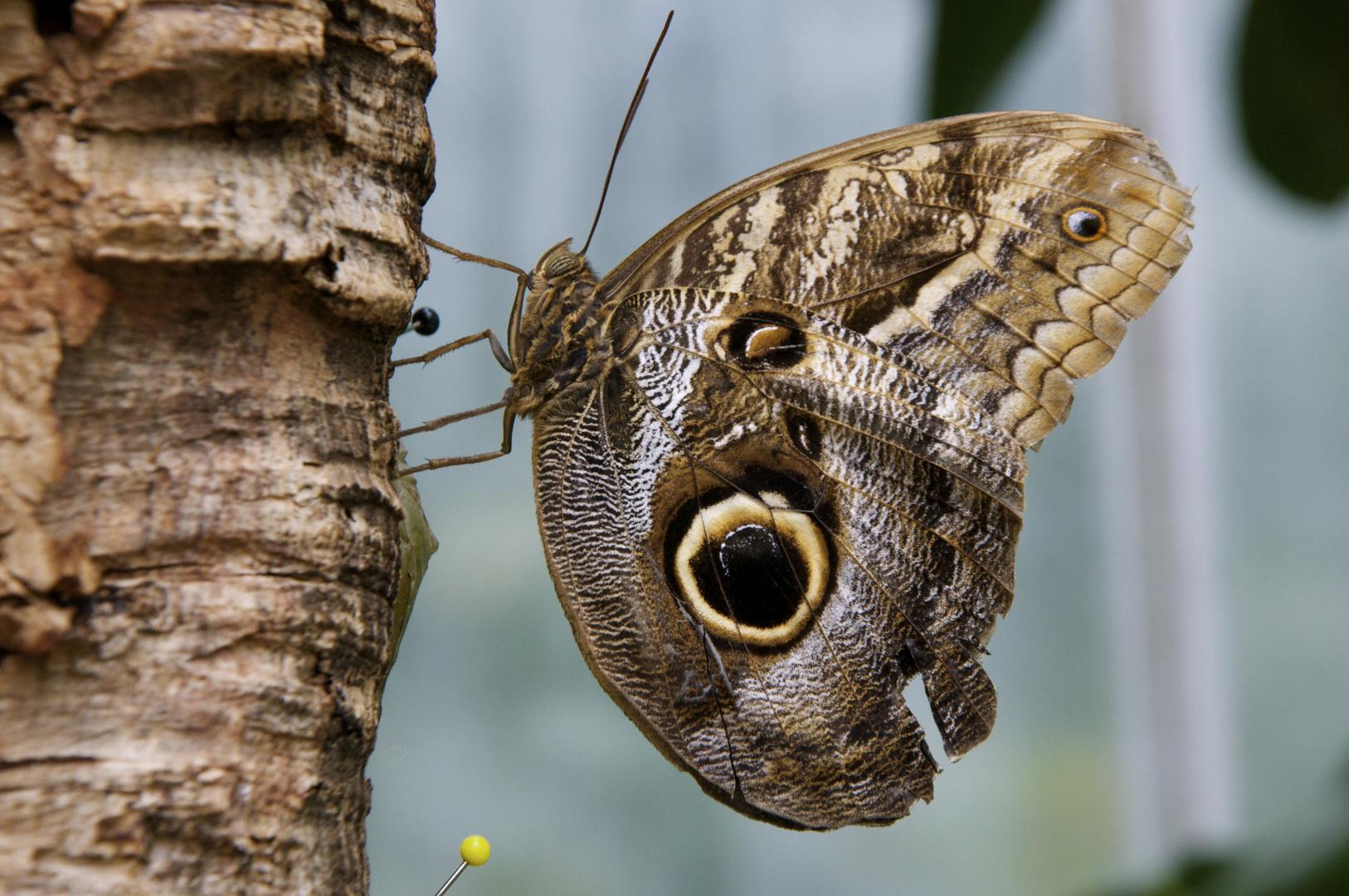 mein Beitrag zur Schmetterlingsausstellung