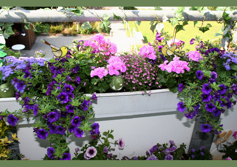 mein bl hender balkon foto bild pflanzen pilze flechten bl ten kleinpflanzen natur. Black Bedroom Furniture Sets. Home Design Ideas