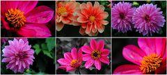 Mein Blütengarten