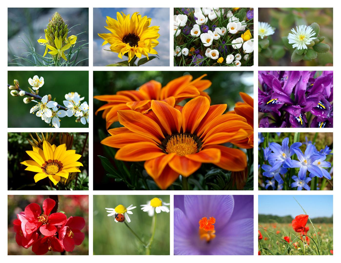 ~ Mein Blumen-Jahr 2010 ~