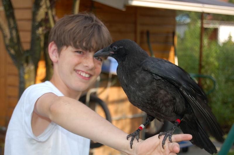 Mein Bruder und Nachbars Krähe