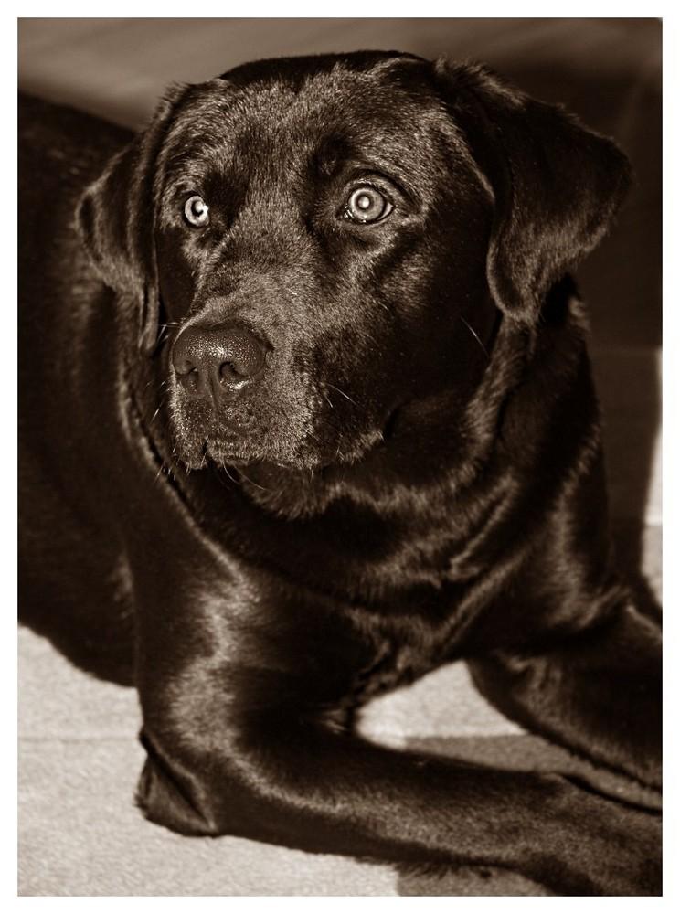 mein Bruno