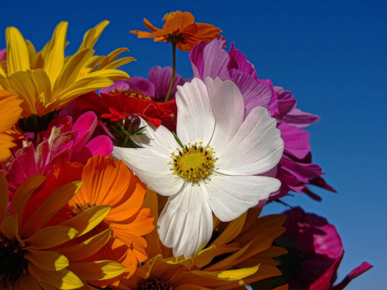 Mein bunter Blumenstrauß...