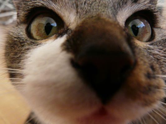Mein Dobby :)