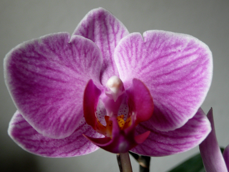 Mein erste Orchidee