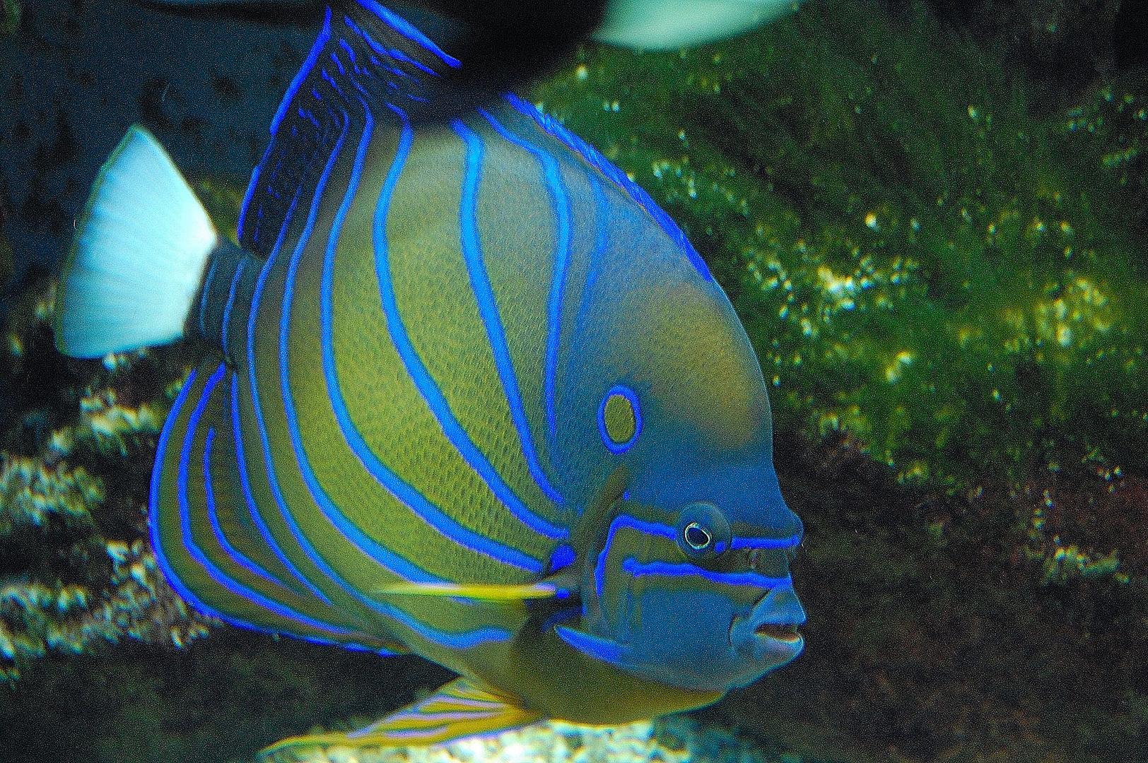 Mein erster Fisch im zoo!!