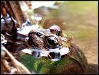 Mein erster Frosch im Teich! ;-)
