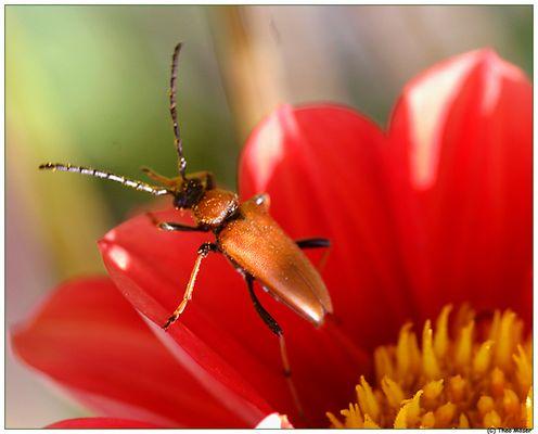 ... mein erster Käfer