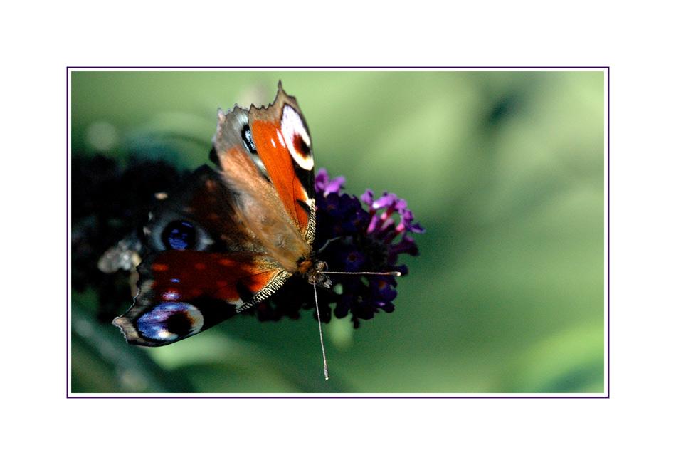 Mein erster Schmetterling