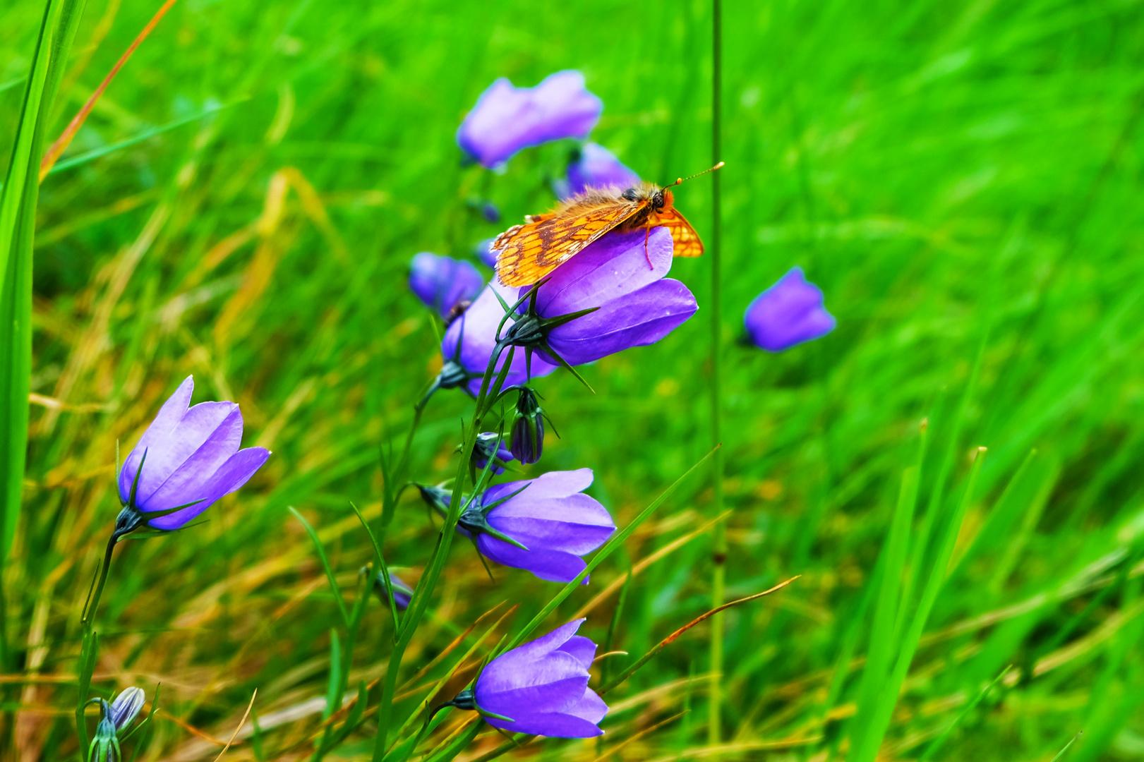 Mein erster Schmetterling (bearbeitet)