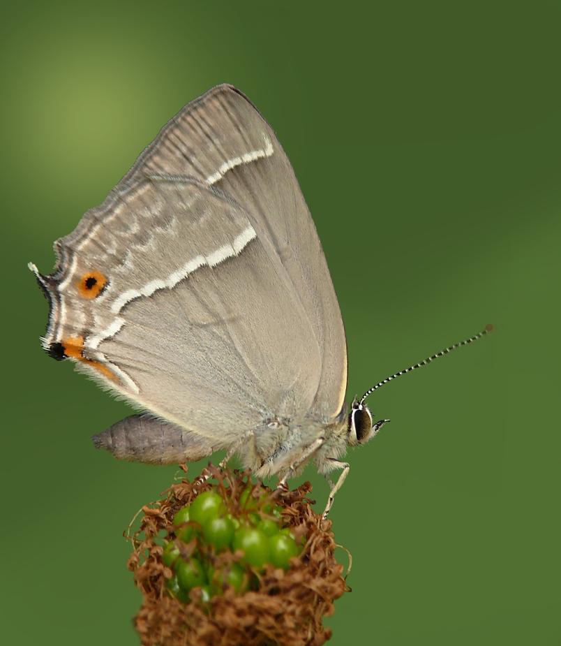 Mein erster Schmetterling in diesem Jahr