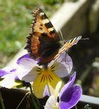 Mein erster Schmetterlingsversuch