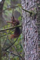 Mein erstes Eichhörnchen.