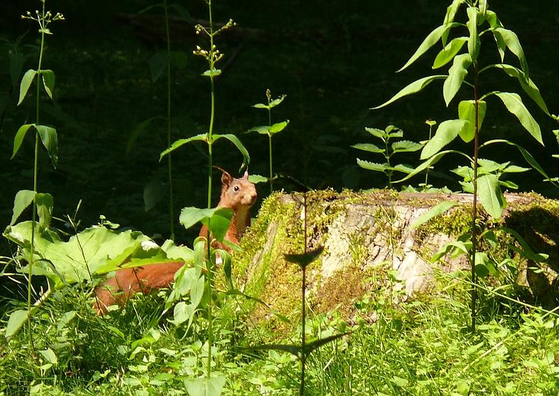 Mein erstes Eichhörnchenfoto...